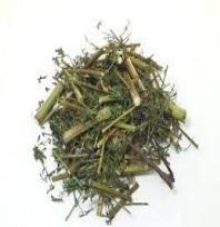 Qing Hao 青蒿 Herba Artemisiae Annuae